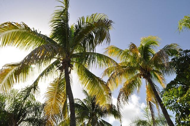 Préparer votre déménagement à la Guadeloupe